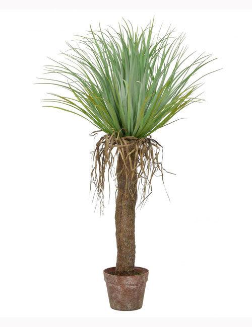 95cm Cycas Palm